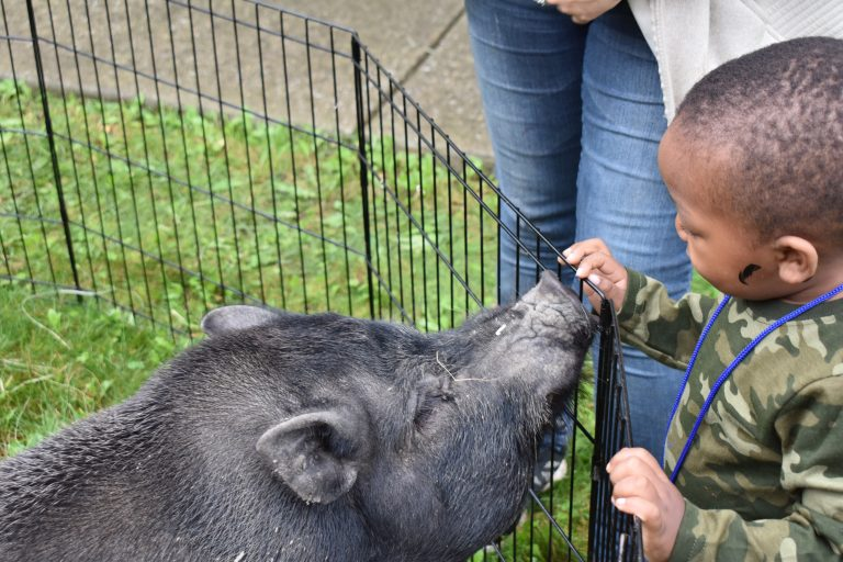 small boy pets a large pig at sos illinois petting zoo